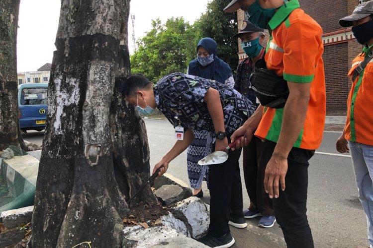 Pelatihan Cavity Treatment atau Penambalan Pohon Untuk Tenaga Pemeliharaan Pohon di Kota Magelang